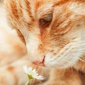 Profile catwithflower